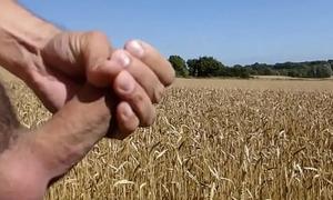 Paroxysmal in fields04